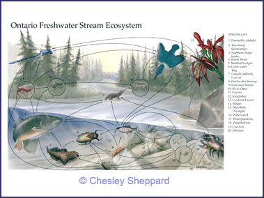fresh water ecosystem A freshwater biome is one that many people overlook the importance of they are much smaller bodies of water, but important just the same.
