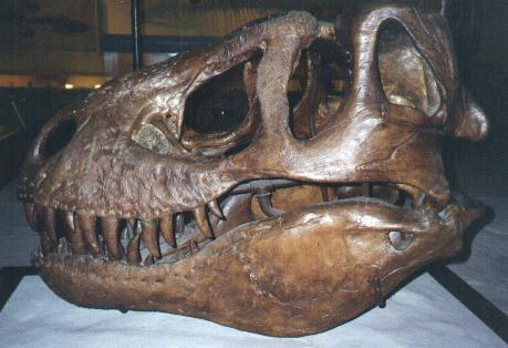 characteristics of tyrannosaurus rex What's the difference between spinosaurus and tyrannosaurus the spinosaurus was the biggest carnivorous dinosaur and physical characteristics size of t rex vs.