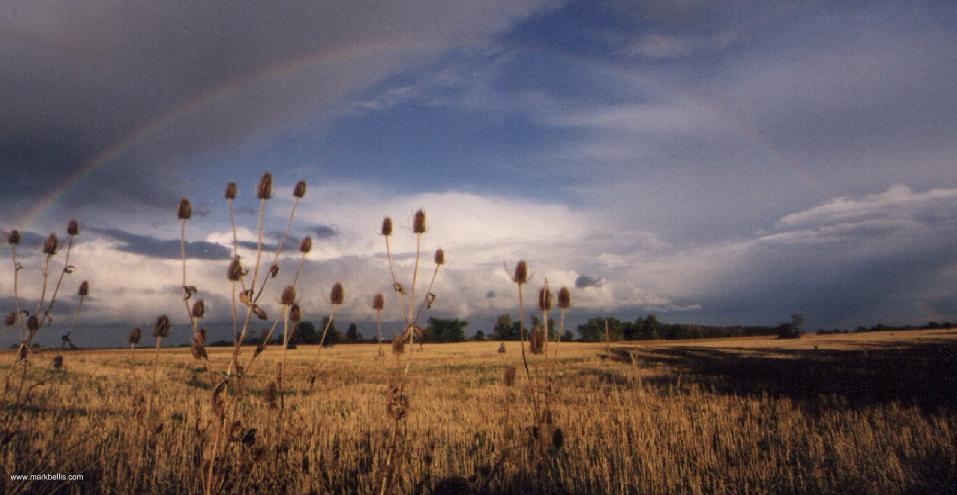 Rainbows over Teasels